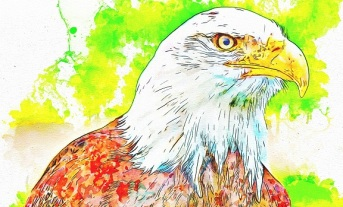 bird-3522203_1920 - Copy