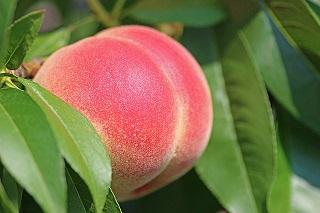 peach-2721852_640 - Copy