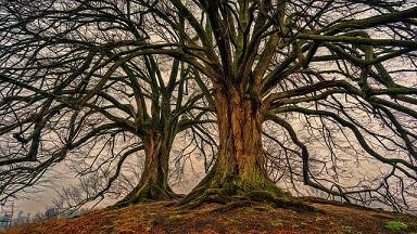 tree-3097419_640 - Copy